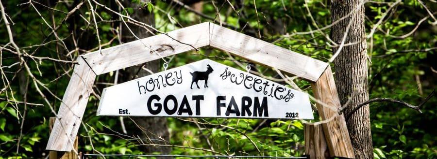 honey sweetie acres farm visits