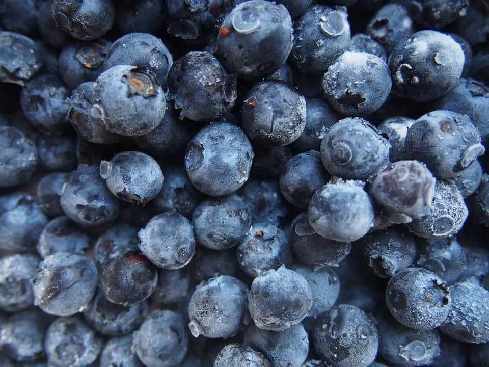 blueberries botanical goat milk soap