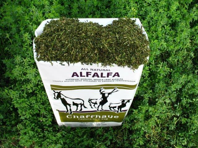 Chaffhaye alfalfa