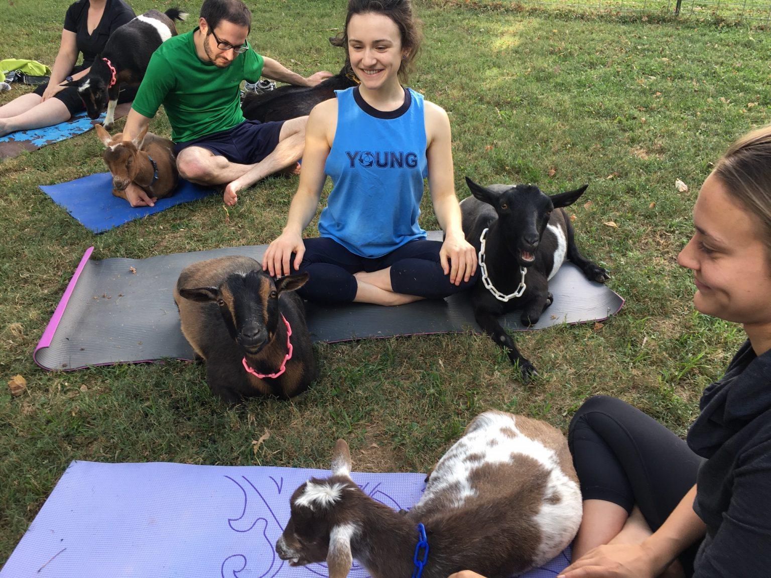 Goat Yoga Giveaway