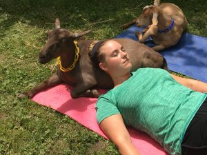 Goat Yoga Ohio