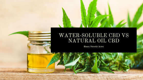 Water-Soluble CBD VS Natural Oil CBD