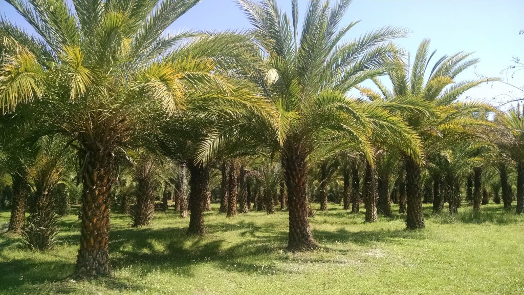 Sustainable Palm Oil - YES, it does exist!